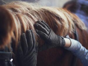 paardrijhandschoenen