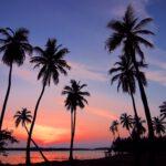 Koop een palm plant naar eigen smaak